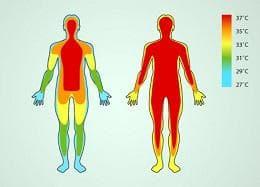 телесна температура