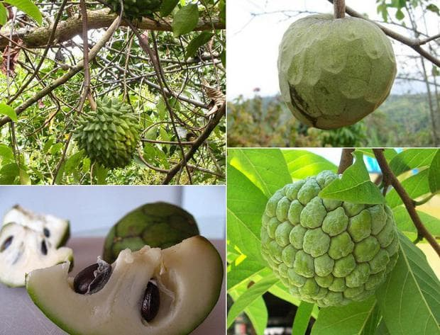 захаросана ябълка