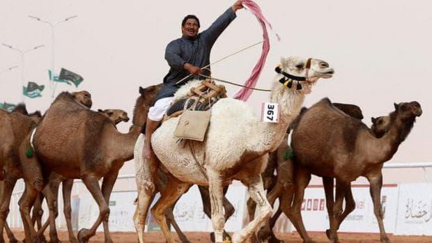 Заради ботокс: Камили отпаднаха от конкурс за красота в Саудитска Арабия