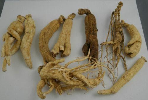 Видове женшен (корен)