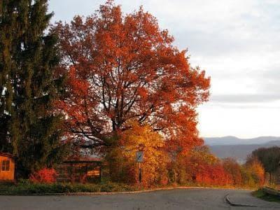 горун през есента