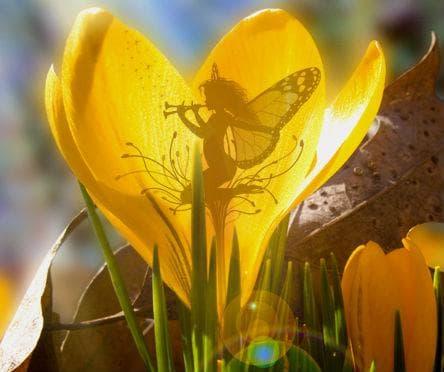 Минзухарът е символ на пробуждането на пролетта