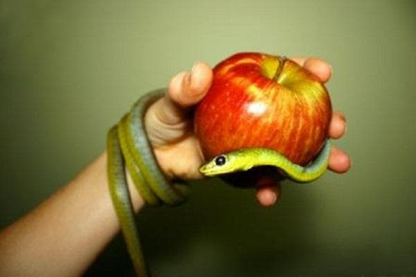 Манипулативен като змия