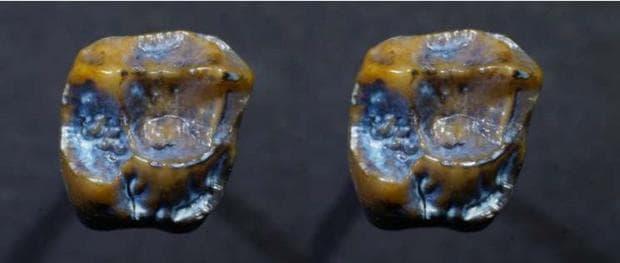 Зъби от хоминини