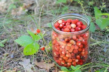 диви ягоди
