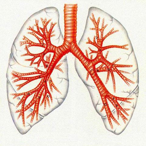 ингибиторы фдэ 5 препараты