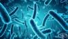 Според учени специфични видове чревни бактерии са свързани с повишен риск от колоректален рак