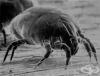 Микроорганизми и вредители се адаптират по-бързо към климатичните промени
