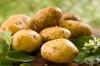 Картофи - полезни свойства и рискове за здравето