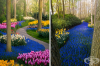 Най-красивата цветна градина в света остава без посетители за първи път от 71 години