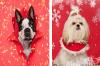 """Портретна фотосесия на кучета в коледна украса """"Пародия на 12-те Коледни дни"""""""