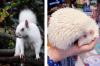25 животни албиноси, които очароват с уникалния си вид