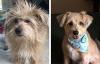 15 кучета преди и след фризьор