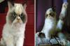 Представяме ви новата най-сърдита котка в света: Мяу-Мяу от Тайван
