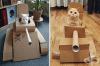 Картонени танкове за котки или защо домашните любимци се сдобиват с лични оръдия