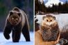 25 хибрида между котки и други животни, които ще ви развеселят