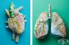 10 снимки на анатомични органи, направени от хартия
