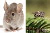 Животни с най-кратък живот на Земята