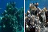 10 снимки показват как изглеждат всъщност морските дълбочини без вода