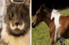 17 уникални животни, оцветени по невероятен начин от природата