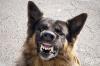 Страхувате ли се от агресивни кучета?