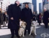 Кучетата-водачи Салти и Розел - приятел в нужда се познава