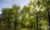 Еколог твърди, че дърветата разговарят помежду си на език, който можем да разгадаем