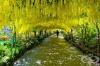 20 магически тунела от дървета, под които ви се иска да минете