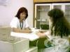 84% от сегашните здравни пътеки са недоплатени