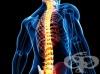 Травми в областта на гърба и кръста