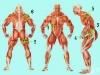 6 мускула, които не можете да игнорирате