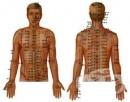 Акупунктура - медицина от древен Китай