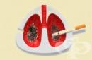 Детоксикация на белия дроб по естествен път