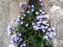 Орфеево цвете, Родопски силивряк, Родопска хаберлея, Каберлия, Китара, Безсмъртниче, Стирака, Шапива билка