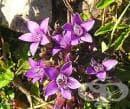 Херкампури