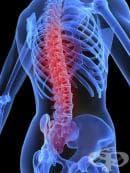 Витамин Д плюс калций ефективно повишава плътността на костите