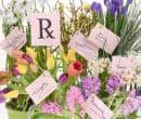 Терапия с цветя - по съвет на Бах