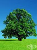 """Фондация """"ЕкоОбщност"""" очаква вашите предложения за конкурса """"Дърво с корен 2012"""""""