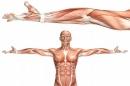 Генът VPS39 предизвиква слабост в мускулите при пациенти с диабет тип 2