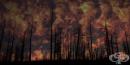 Учени създадоха екологичен гел, предотвратяващ избухването на горски пожари