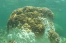 Стресиращо измиране на корали в Азия