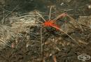 Мъжките паяци изпитват удоволствие от сексуалните занимания