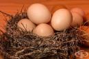 Какви са ползите от консумацията на яйца