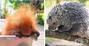 20 бебета животни, които едва ли сте виждали
