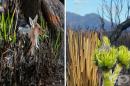 20 снимки показват как се възстановява дивата природа в Австралия
