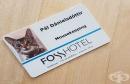 15 котки, които са си намерили работа и помагат на хората