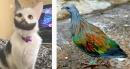 15 животни показват, че природата е истински художник