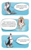 Кратко ръководство, което да ви направи експерт по кучешките породи