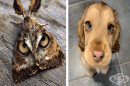 18 симпатични животни, които предизвикват учудване от пръв поглед и наслада - от втори