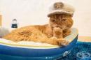 20 снимки на котки с шапки